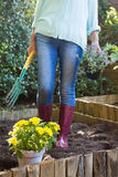 Low section of senior woman holding garden fork and potted plant Royalty Free Stock Photography