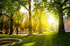 Low setting sun in green park Stock Photography