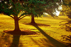 Low setting sun in park. Atlanta, GA. Royalty Free Stock Photo