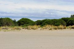 low shrubs and sand 1 Royalty Free Stock Photos