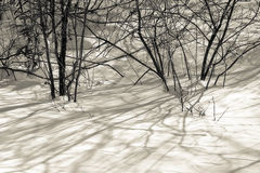Low shrubs in winter shadows Royalty Free Stock Image