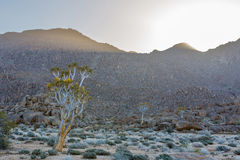 Low side light in Richtersveld Royalty Free Stock Image