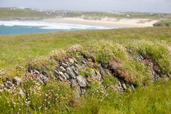 Coastal Wall Covered in Grass and Flowers Royalty Free Stock Images
