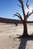 Low sun and Deadvlei Royalty Free Stock Photos