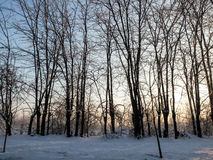 Low temperatures in winter in a forest Royalty Free Stock Image