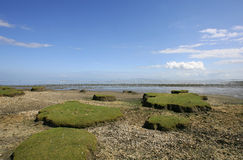 Low tide. At the borders of the Wadden sea  in the north of Friesland(Holland Stock Images