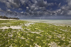 Low tide. And cloudy sky in zanzibar Stock Image