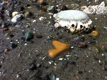 Low Tide - barnacles2 Stock Images