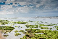 Low tide at the beach near ocen. Low tide view at the beach near ocean in Sri Lanka Royalty Free Stock Image
