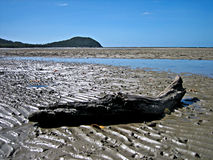 Low Tide at Cape Tribulation Stock Photo