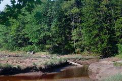 Low Tide exposing rocks, boulders and fallen trees in a Maine Ma Royalty Free Stock Photo