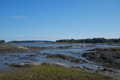 Low Tide exposing rocks, boulders and fallen trees in a Maine Ma Royalty Free Stock Photos