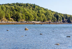 Low Tide by Green Maine Coast Royalty Free Stock Photo