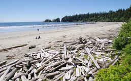 Low tide on the Long Beach with driftwoods.  Vancouver Island, C Royalty Free Stock Photography