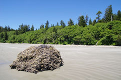 Low tide on the Long Beach.  Vancouver Island, Canada Royalty Free Stock Image