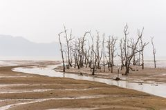 Low tide. On the main beach of Bako National Park, West Sarawak, Borneo, Malaysia Stock Photos