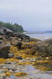 Low tide in maine Stock Images