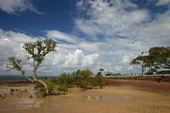 Low Tide Mangrove Trees. Low-tide at beach with people in park in background Stock Photography