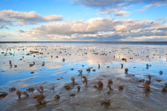 Low tide in North sea Royalty Free Stock Image