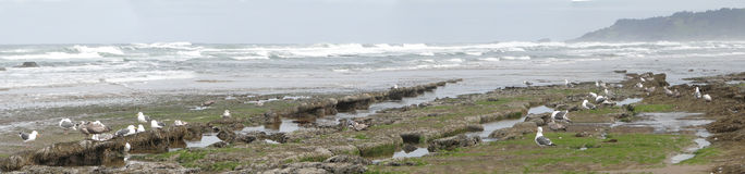 Low tide panorama, Stock Photography