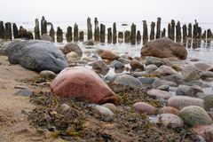 Wooden piles, rocks and seaweed at low tide on the Island of Rügen / Ruegen in the Baltic Sea, Germany, Europe royalty free stock photos