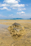 Low tide on a sandy beach with blue sky Royalty Free Stock Photos
