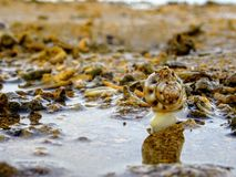 Low tide Sanur Bali Indonesia royalty free stock photography