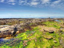 Low tide sea bottom Stock Photo