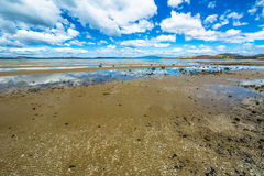 Low tide south east coast of  Tasmania Royalty Free Stock Photos
