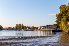 Low tide on Thames, Chiswick royalty free stock photography