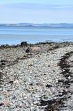 Low tide in Trondheimsfjorden Norway Stock Photos