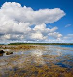 Low tide on White Sea shore, North-West Russia. Stones and seaweeds discovered in low tide on the White Sea shore. Panorama from two horizontal shots stock photography