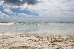 Low Tide In Zanzibar Stock Photo