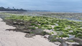 Low tides Royalty Free Stock Images