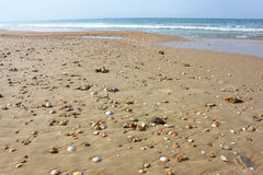 Low view of beach sand and seashells Stock Photos