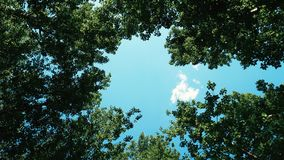 Low View of Green Leaf Trees and Blue Sky during Daytime Royalty Free Stock Images