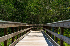 Low view of wooden boardwalk in florida. Looking down the length of a wooden boardwalk surrounded by subtropical vegetation on a sunny day in Bonita Springs Stock Photo