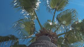Low angle view of palm. stock video