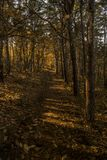 Low sunlight casting rays and shadows between trees in forrest Stock Photography