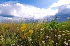 Low white clouds on a blue sky over a meadow with a carpet of lush grasses and beautiful flowers. Beautiful scenery of stock image