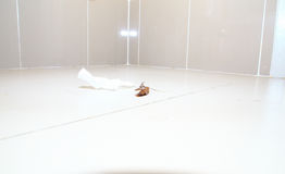 Low and wide angle shot of a dead cockroach on floor toilet Royalty Free Stock Photos