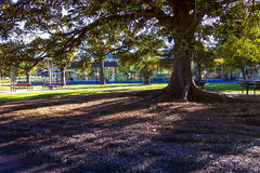 Low winter sun casting long shadows. Under a tree in a park. Copyspace royalty free stock image