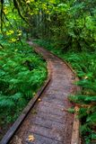 A low wooden bridge acts as a trail bending left in the Hoh rain forest. A low wooden bridge acts as a trail bending to the left in the Hoh rain forest stock image