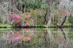Lowcountry South Carolina Early Spring Scenic Stock Photo