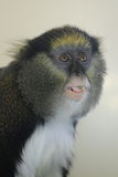 Lowe's monkey Stock Images
