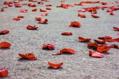 Röda rosa Petals på däcka Royaltyfri Foto