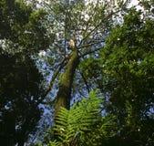 Lowen metar beskådar av trees Arkivfoton