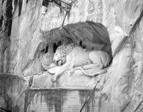 Lowendenkmal Lion Monument, Lucerne, Schweiz royaltyfria foton