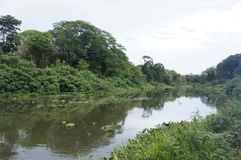 River Tempisque Tropical Royalty Free Stock Image
