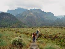 Lower bigo bog, Rwenzori Mountains National Park. Lower bigo bog on our way to Bujuku Hut, Rwenzori Mountains, Rwenzori Mountain National Park Royalty Free Stock Photo